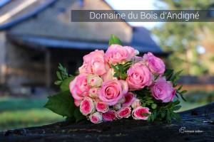 Domaine du Bois Andigné