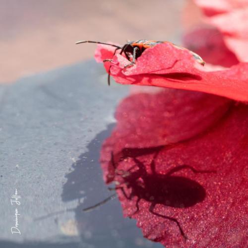 L'insecte et son reflet se regardent